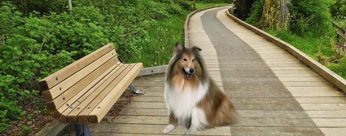 Dog Trot around Deer Lake