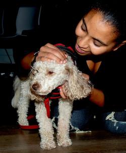 Leia (Miniature Poodle) 💖