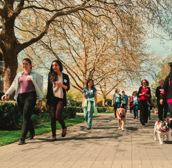 Walking for Wellness