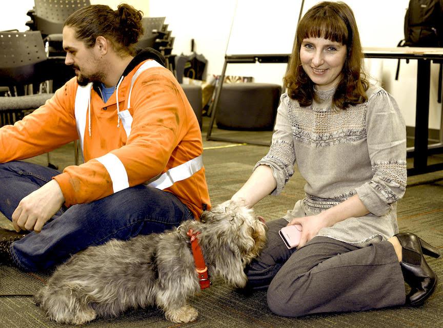 Dandie Dinmont Terrier Puppy 😸