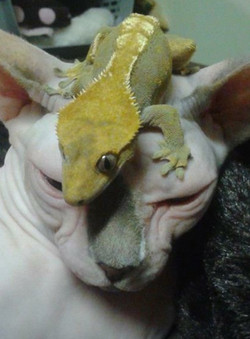 Cat and Gecko