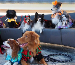 Therapy Dog Group (Tim Stark)