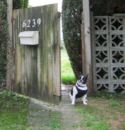 Garden Security Guard