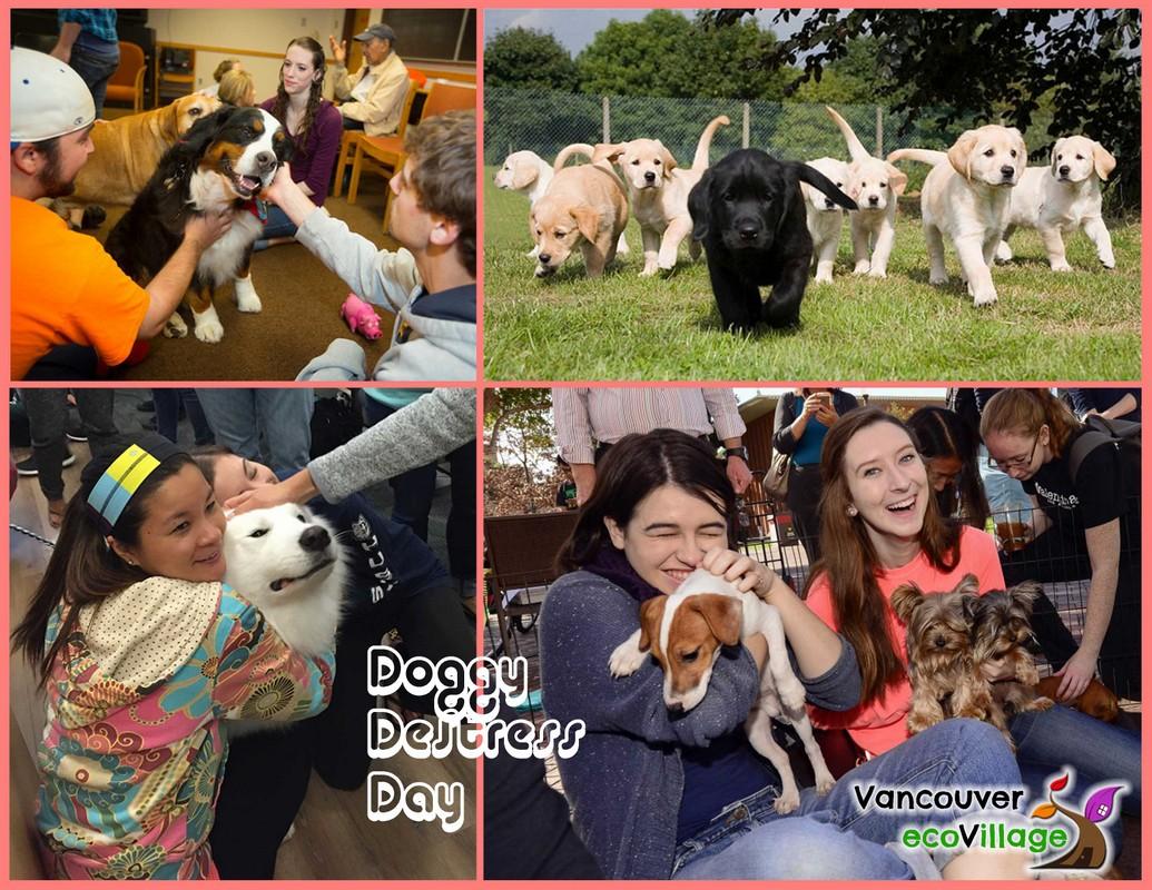 BCIT Doggy Destress Day Album