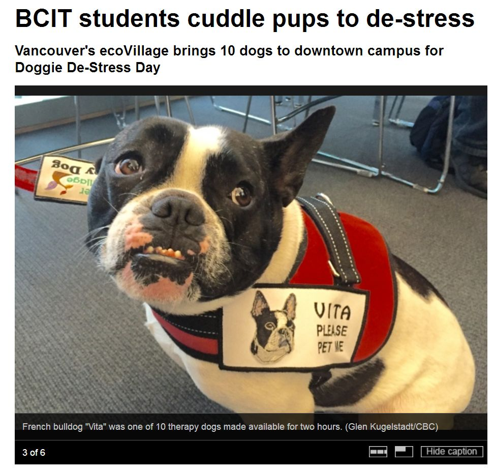 CBC News Photo Gallery 💋