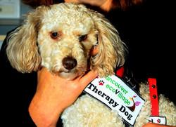 PRINCESS LEIA (Poodle)