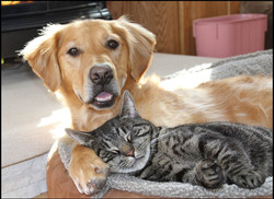Foster Pets Rock!