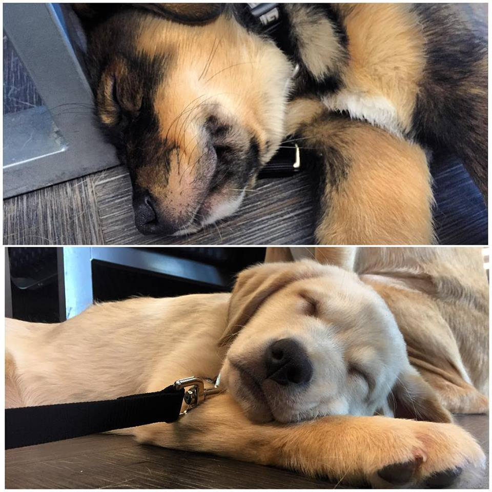 Puppies Snoozing
