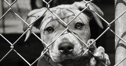 RESCUE Don't Buy!