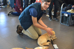 Puppies are Natural Therapy Dogs