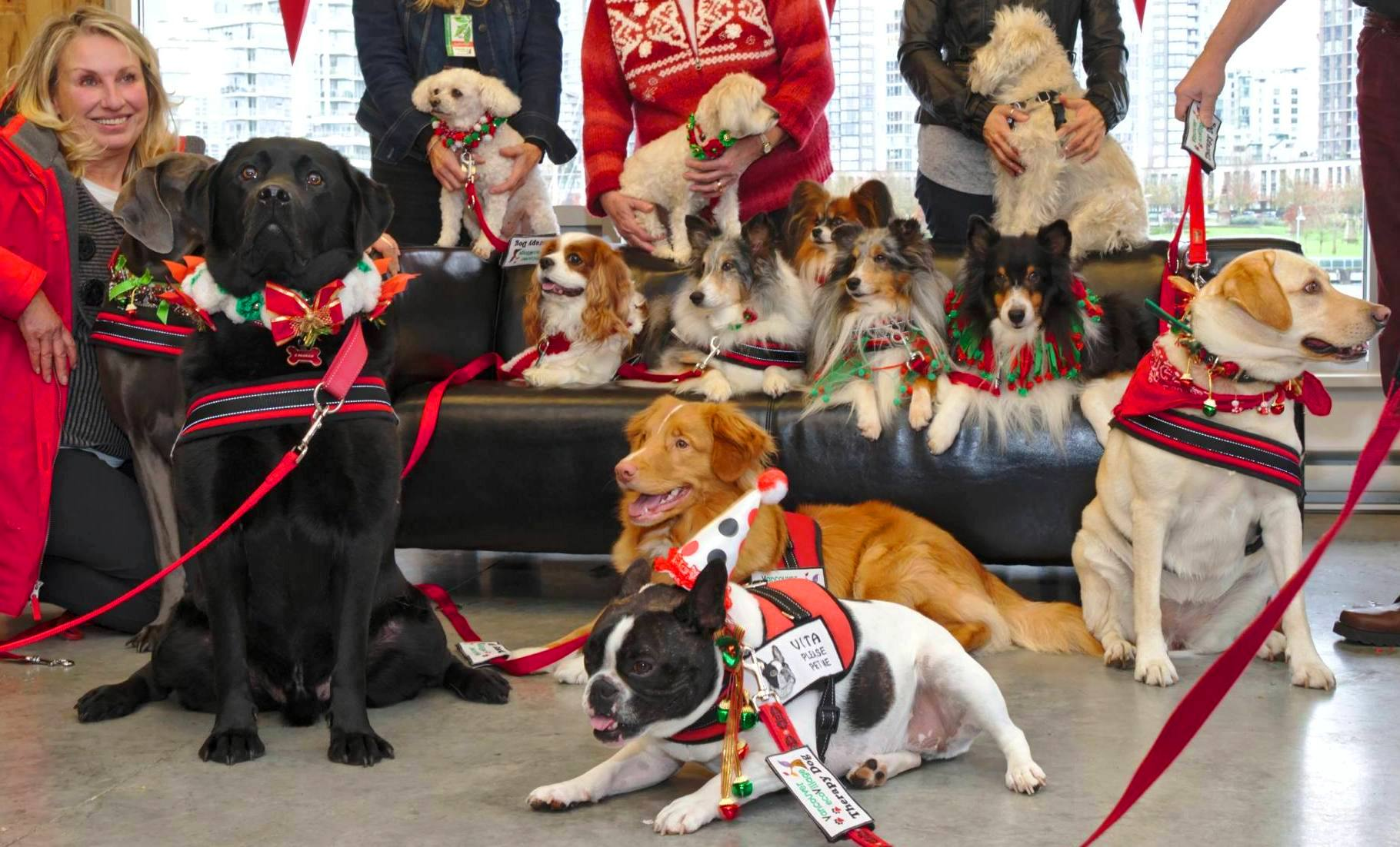 Therapy Dog Party