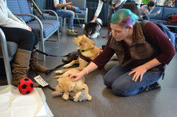 More Puppy Love