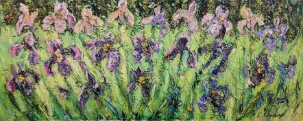 Sunny Irises