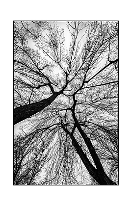 NEW - Symphony of Branches