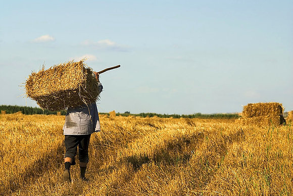 Peasant in the Field