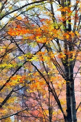 Goč Mountain Forest