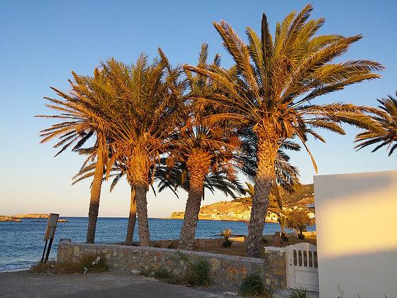 Pigadia Palm Trees