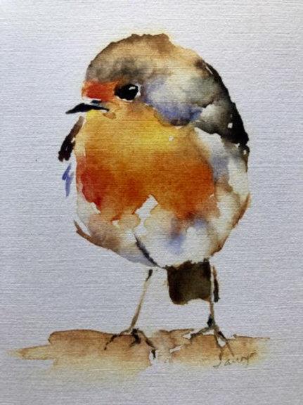 English Robin 1