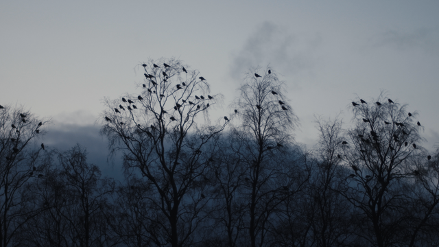 Birds_3.png