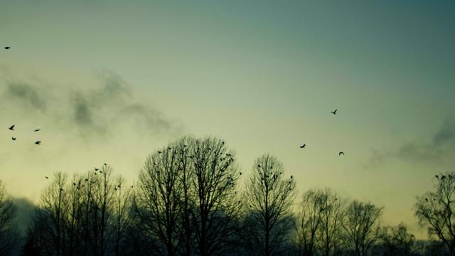 Birds_6.png
