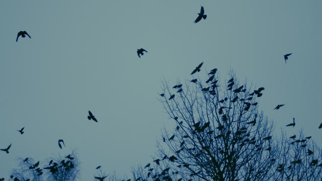 birds2.png
