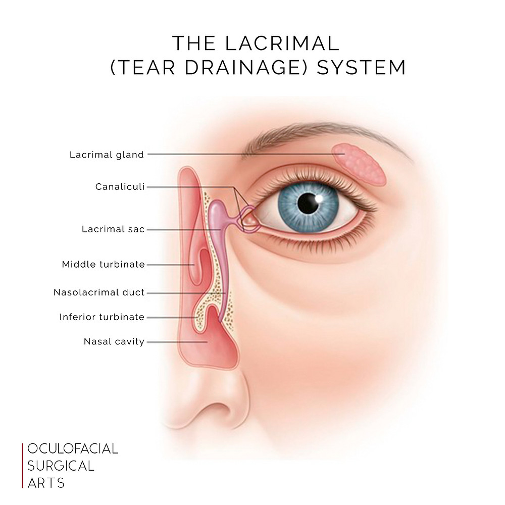 The Lacrimal (Tear Drainage) System