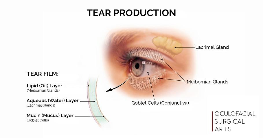 Tear Production and Tear Film
