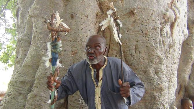 Découvrez la vidéo : le gardien du baobab sacré de Toumousseni