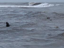Cape Cod Ocean 5.jpg