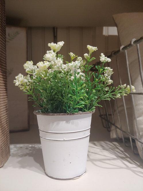 Mini Accent plant