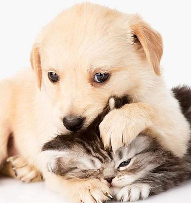 kitten puppy.jpg