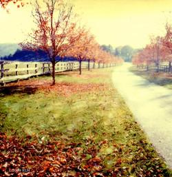 Autumn in Maryland