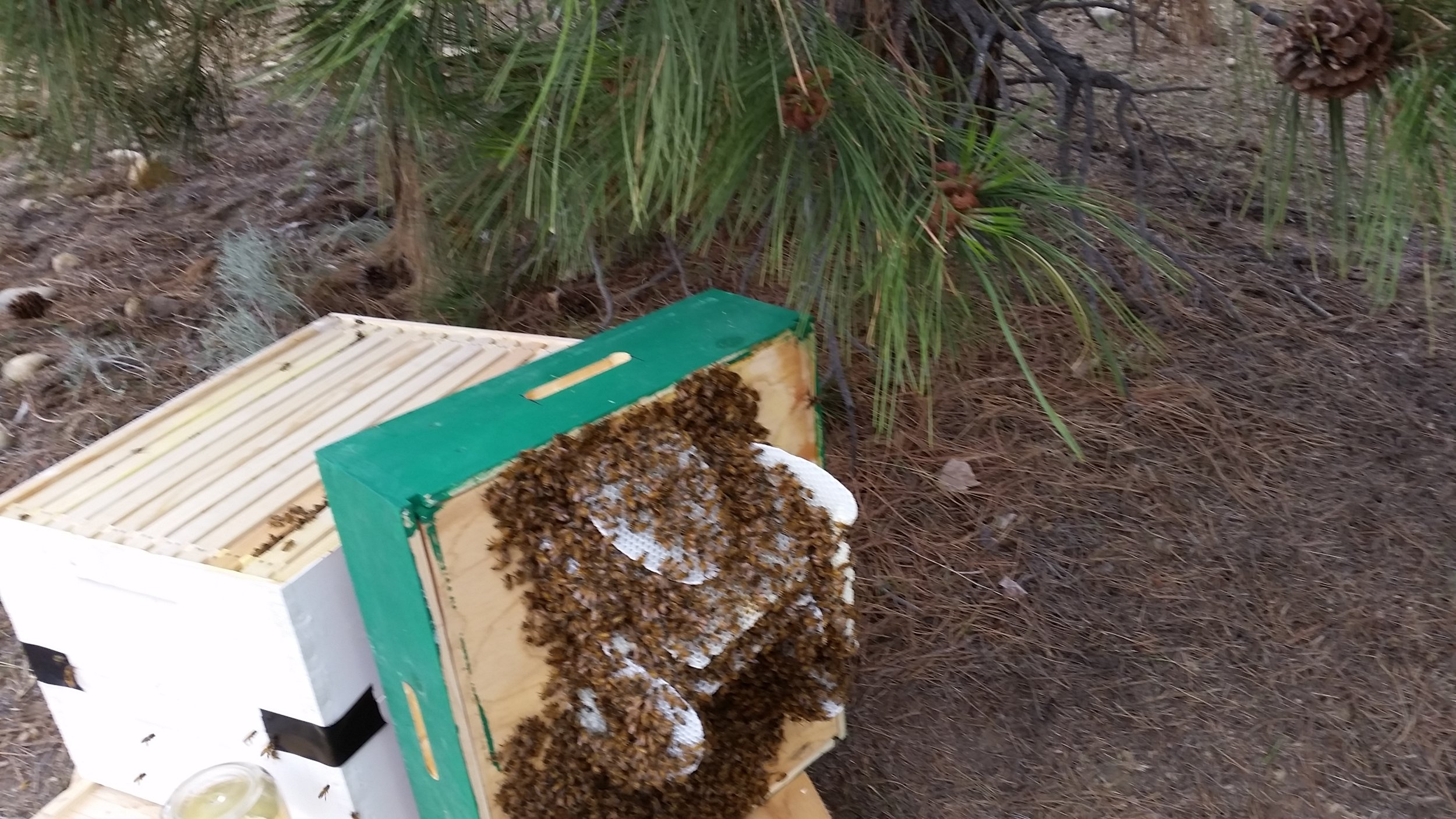 New comb from a swarm