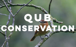 QUB Conservation