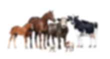species-animal-group.webp