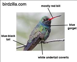 Birds by Dr. Tom: