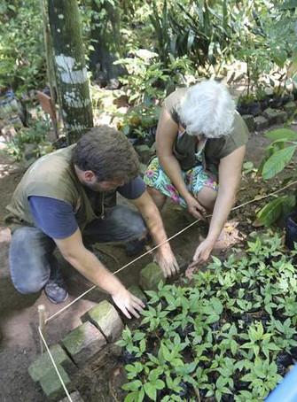 Niterói terá área de restinga reflorestada