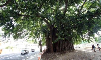 Niterói terá guia com as árvores mais representativas
