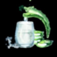 Aloe vera natural extract. Watercolor ha