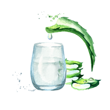 Aloe vera natural extract. Watercolor ha