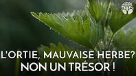 maxresdefault - 2020-03-01T095116.565.jp