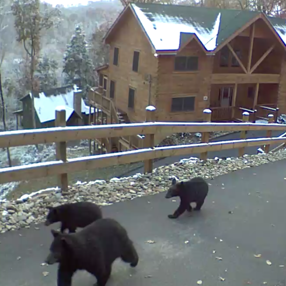 Smokies Lodge Bear Photo.PNG