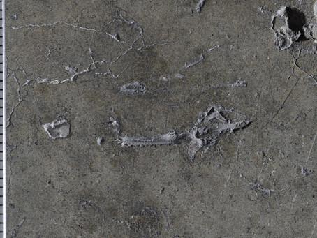 BFI Distressed Concrete Warehouse Slab and the Concrete Petrographer