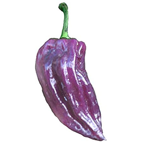 Bhut Jolokia Purple Ghost SUPER HOT Pepper Organic Seeds