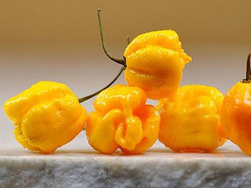 7-Pot Yellow SUPER HOT Pepper Organic Seeds