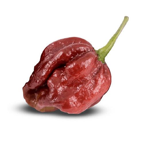 7-Pot Dougiah SUPER HOT Pepper Organic Seeds