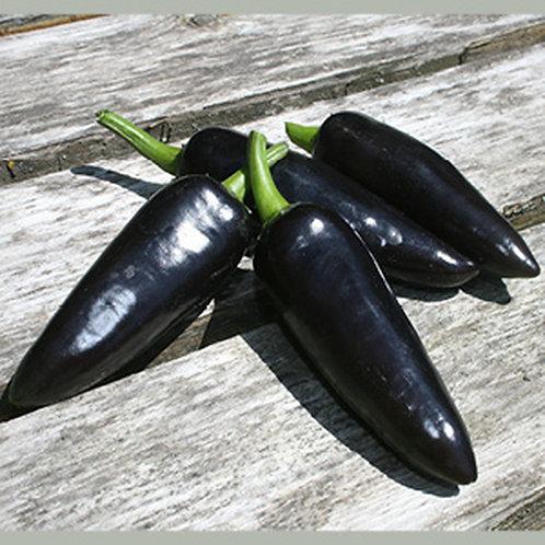 Hungarian Black Pepper HOT Pepper Organic Seeds