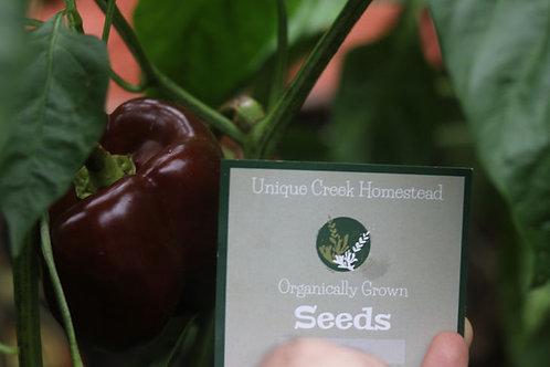 Organic CHOCOLATE Bell Pepper Seeds