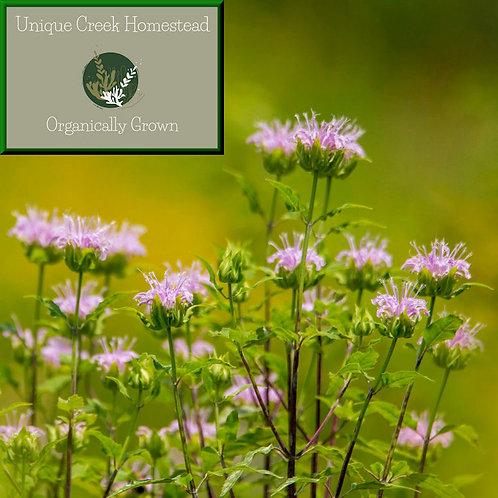 Wild Bergamot Bee Balm Mint Wildflower Organic Naturally Grown