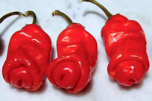 Peter Pepper Erotic Funny SUPER HOT Pepper Organic Seeds